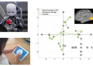 Vision and Haptics: a Cognitive and Computational Investigation About How We Perceive the World